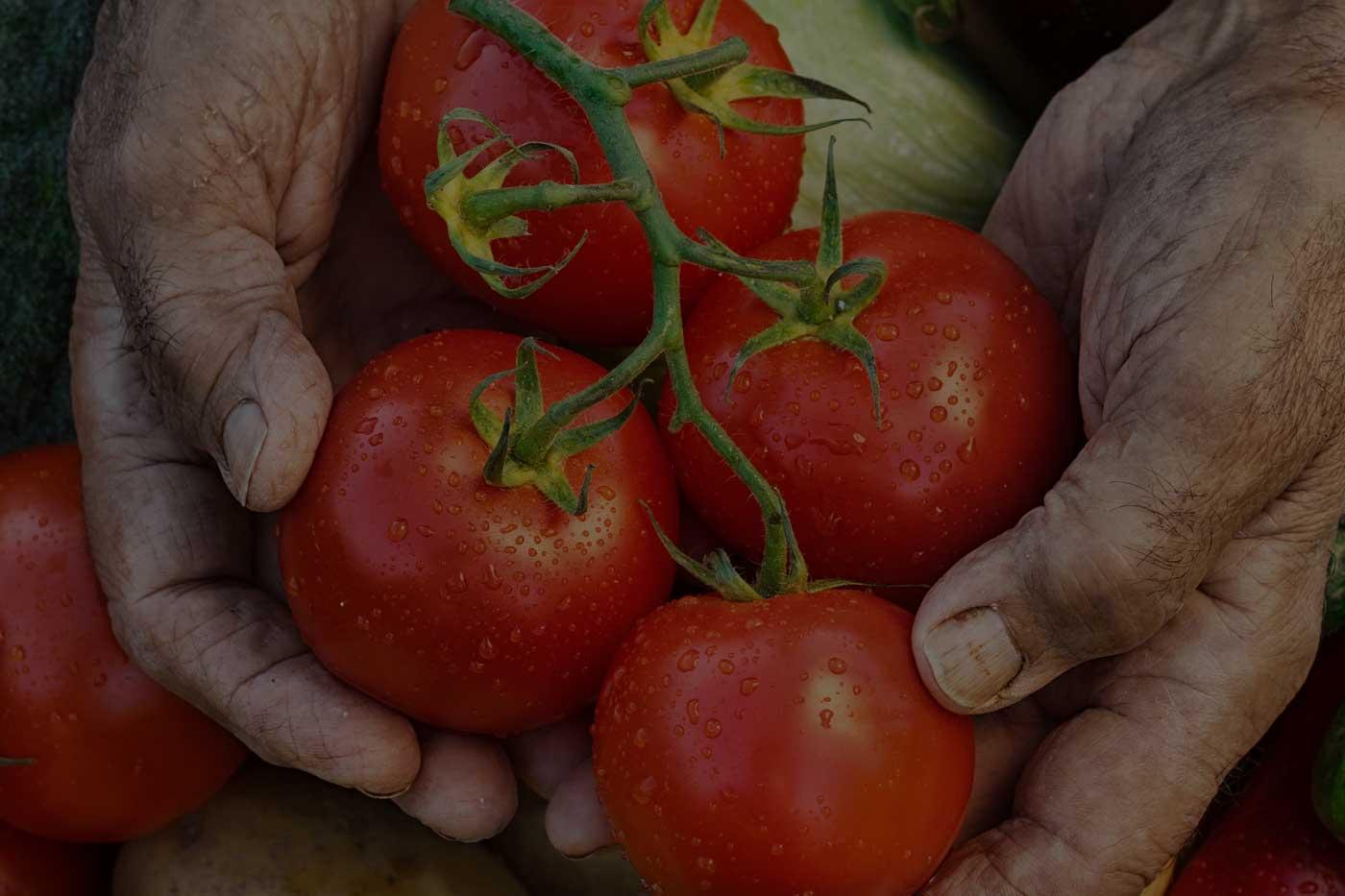 verdura-fresca-livigno